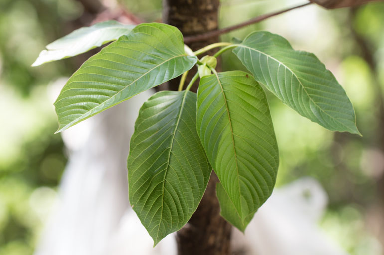 Congratulations! Your Kratom Powder Is (Are) Concerning To Quit Being Relevant